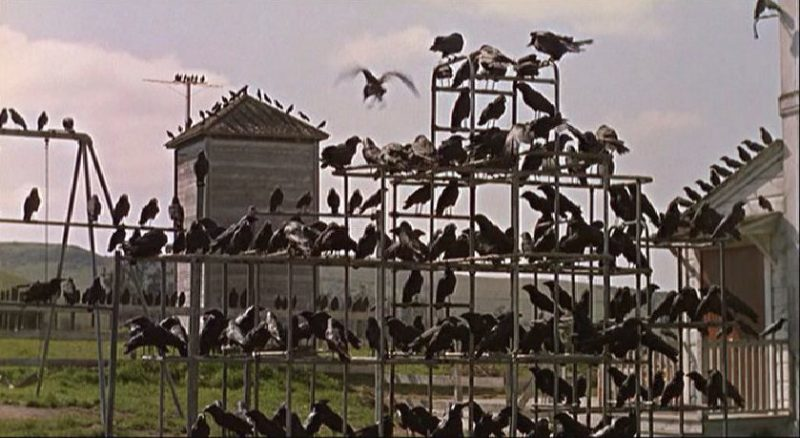 Alfred Hitchcock's THE BIRDS: Still Terrifying After More Than 50 Years