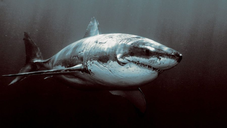 The 30th Annual Shark Week Promises To Be Sharktastic!